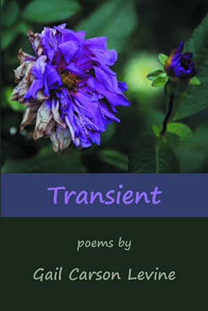 Transient Front Cover